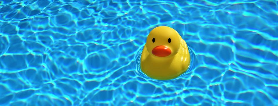 kachnička v bazénu