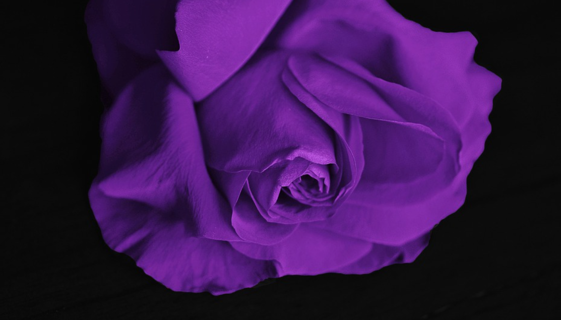 I vám jistě sednou lila šaty