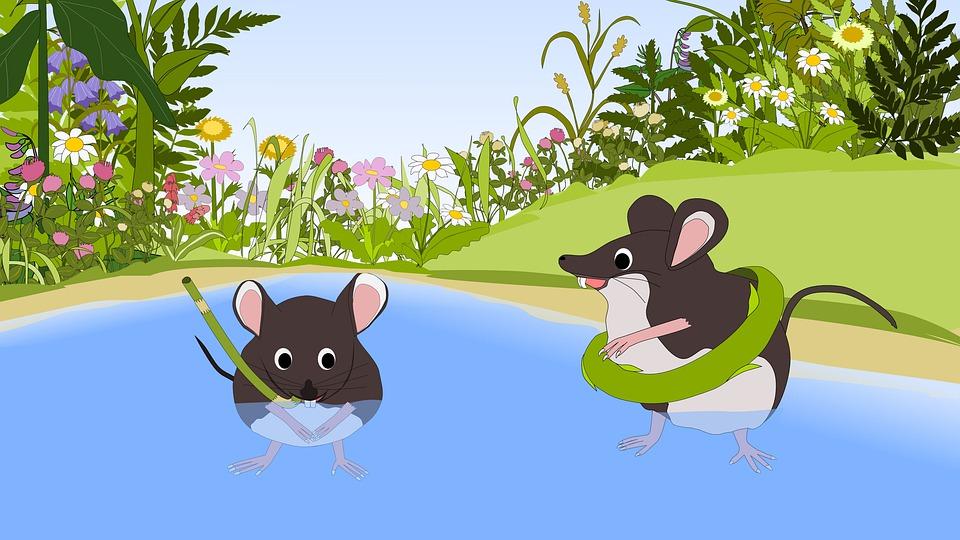 myši u vody