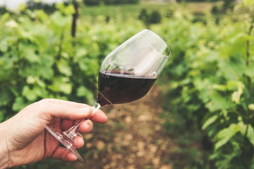 Kvalitní víno pro kvalitní život – Víte, proč je dobré pít denně sklenku vína?