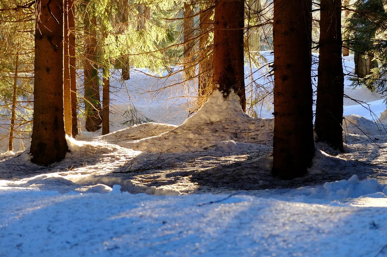 zima v lese v Jizerských horách